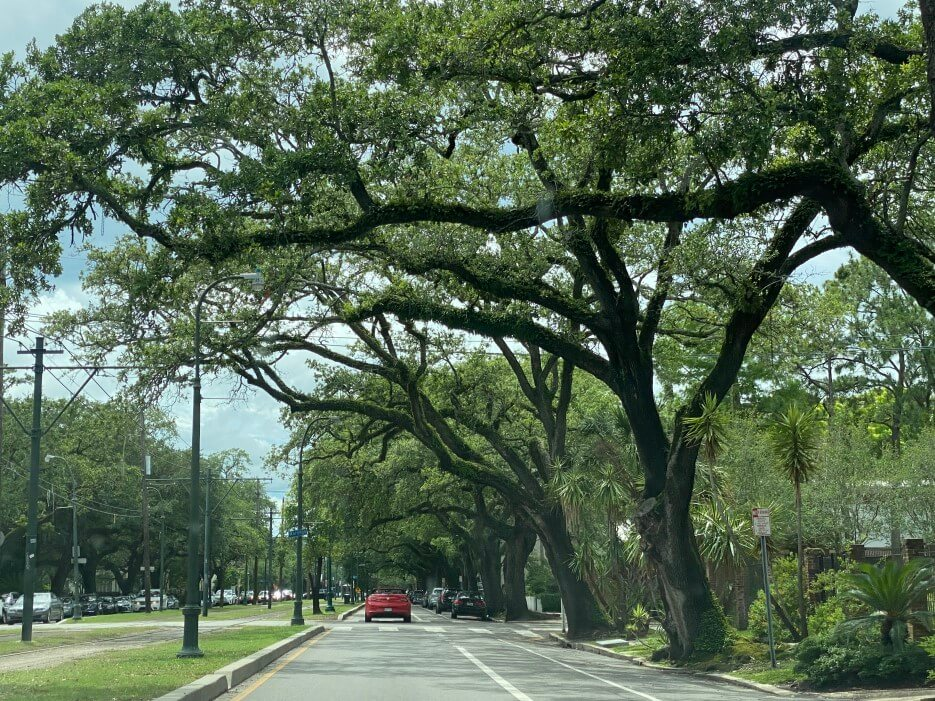 the view looking down Saint Charles Avenue